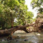 Rivière des grandes plaines à pointe noire, Guadeloupe