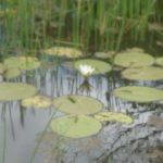 Riche biodiversité, mangrove, vieux habitants, Gwada
