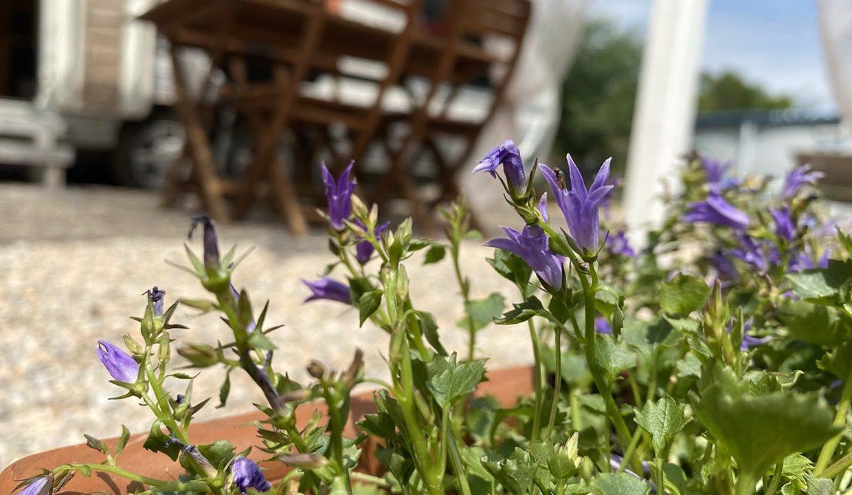 fleurs-terrasse-les-adrets-esterel-Airbnjune